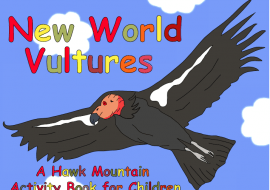 New World Vultuers Activity Book