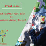 IMBD Activity Ideas Flipbook