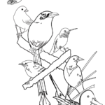2015 Coloring Page