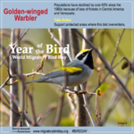 Golden-Winged Warbler Infographic