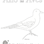 2018 Coloring Pages Poster Birds-Spanish