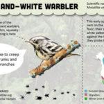 2015 Species Infographics