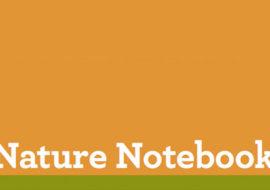 Make A Nature Notebook