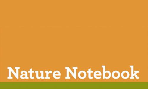 Make A Nature Notebook