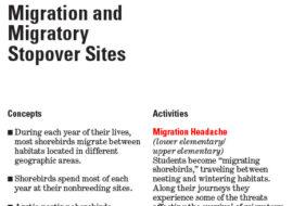 Shorebirds Migration Game