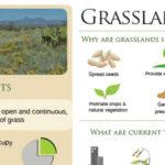 Habitat Factsheets - English