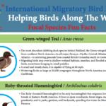 2017 Bird Species Factsheet - English