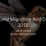 WMBD Webinar: Why connect through World Migratory Bird Day?