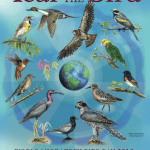 WMBD 2018 EFTA Poster English