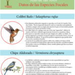 2018 Bird Factsheets: Spanish