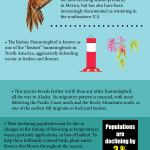 2018 Species Infographics - English