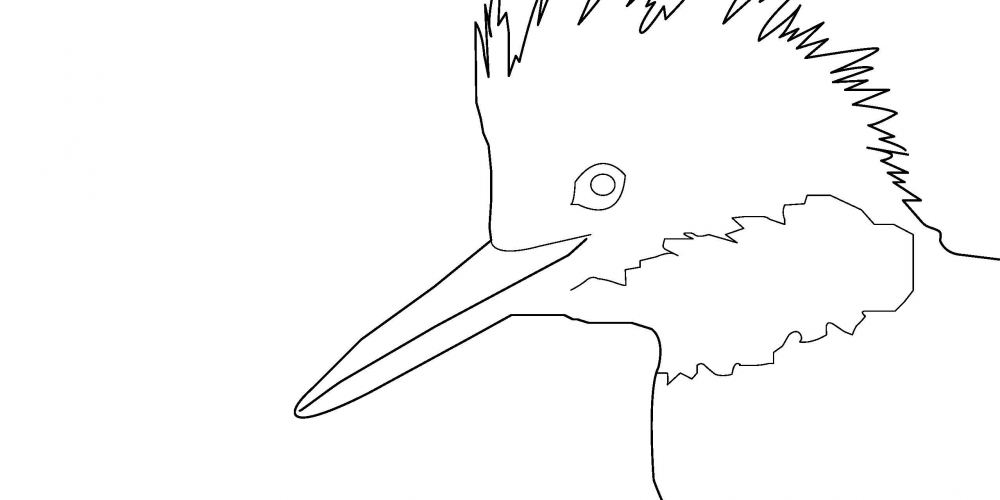 2019 Coloring Page - Belted Kingfisher