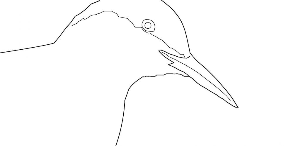 2019 Coloring Page - Common Tern