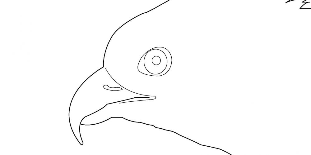 Coloring Page - Osprey 2019