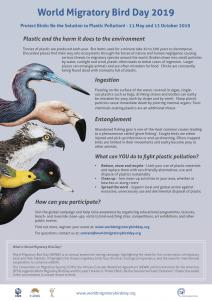 World Migratory Bird Day Flyer 2019