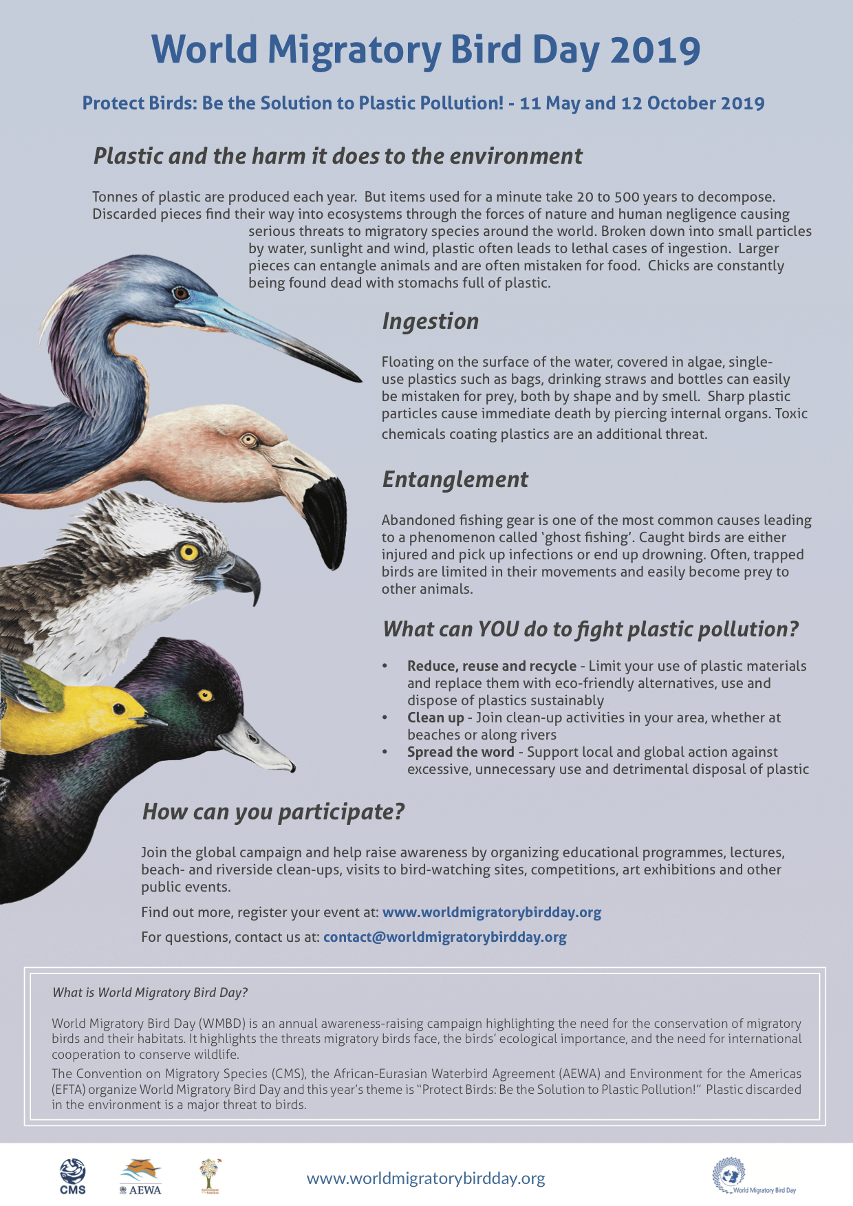 2019 World Migratory Bird Day Flyer