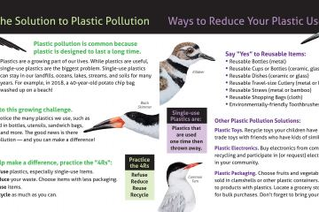 Plastic Pollution Pamphlet 2019