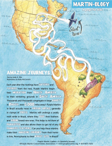 2020 Activity: Purple Martin Amazing Journey