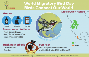 2020 Infographic: Hummingbird